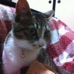 cat20120417220656.jpg