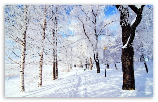 winter_wonderland_8-t2